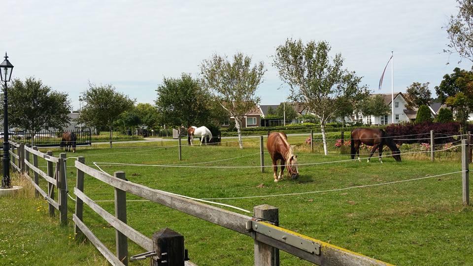 manege paardjes grazen